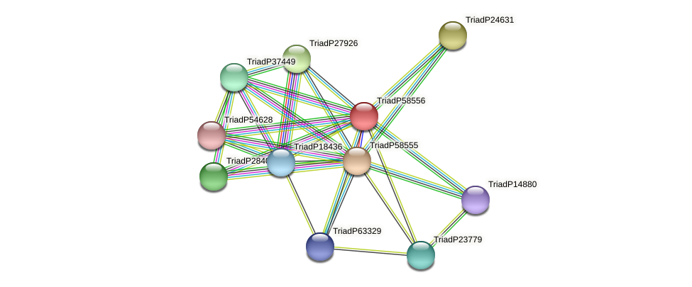 TriadP58556 protein (Trichoplax adhaerens) - STRING interaction network