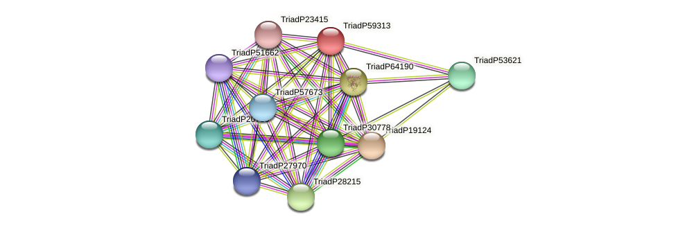 TriadP59313 protein (Trichoplax adhaerens) - STRING interaction network