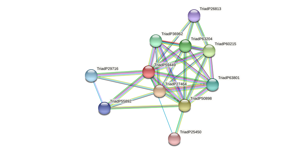 TriadP59449 protein (Trichoplax adhaerens) - STRING interaction network