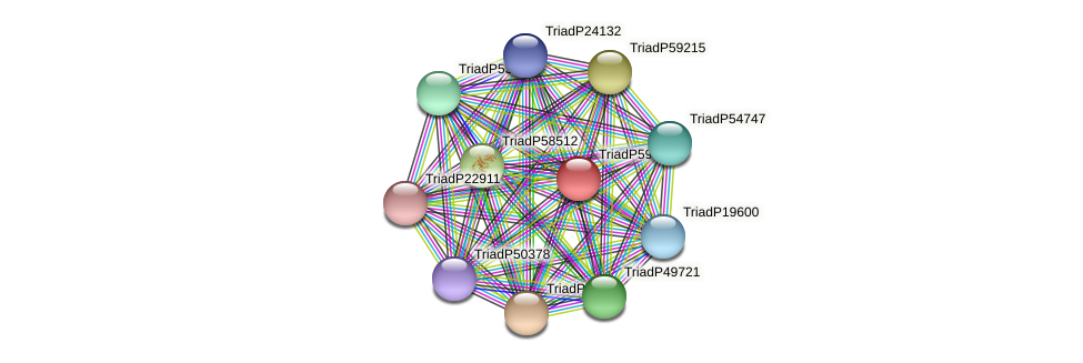 TriadP59521 protein (Trichoplax adhaerens) - STRING interaction network