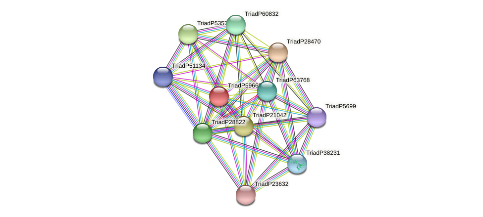 TriadP59660 protein (Trichoplax adhaerens) - STRING interaction network