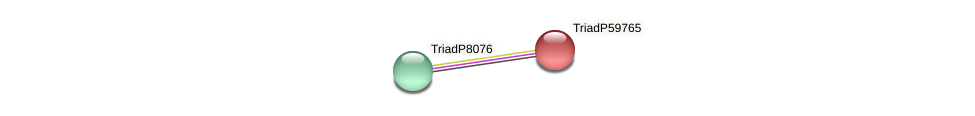 TriadP59765 protein (Trichoplax adhaerens) - STRING interaction network