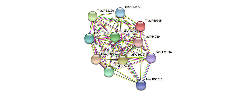 TriadP59795 protein (Trichoplax adhaerens) - STRING interaction network