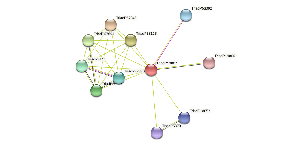 TriadP59887 protein (Trichoplax adhaerens) - STRING interaction network