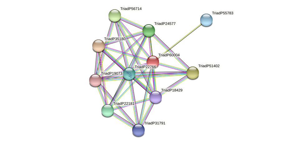 TriadP60004 protein (Trichoplax adhaerens) - STRING interaction network