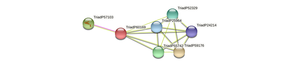 TriadP60169 protein (Trichoplax adhaerens) - STRING interaction network