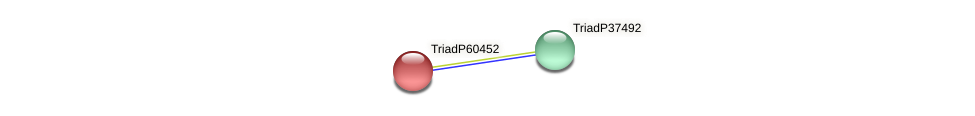 TriadP60452 protein (Trichoplax adhaerens) - STRING interaction network