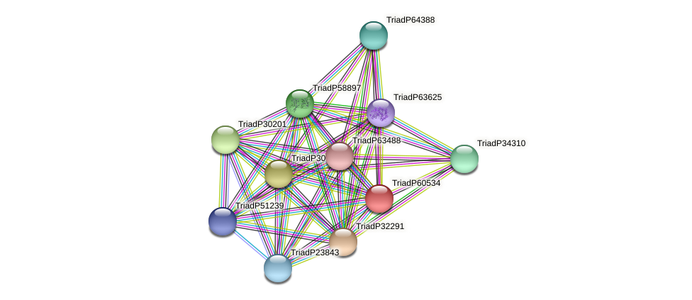 TriadP60534 protein (Trichoplax adhaerens) - STRING interaction network