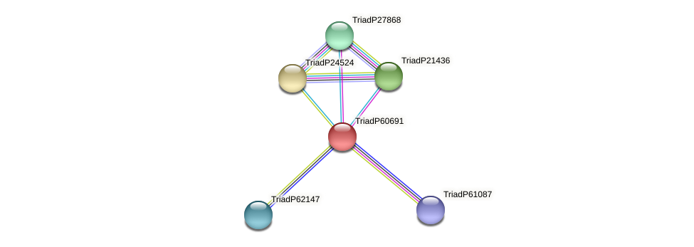 TriadP60691 protein (Trichoplax adhaerens) - STRING interaction network