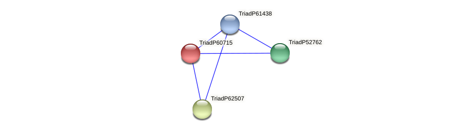 TriadP60715 protein (Trichoplax adhaerens) - STRING interaction network