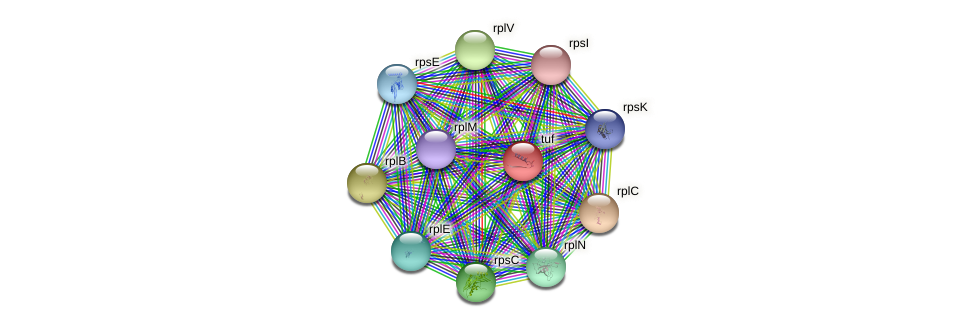 tuf protein (Nocardia cyriacigeorgica) - STRING interaction network