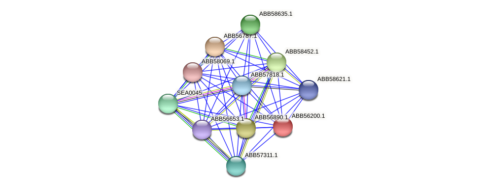 ABB56200.1 protein (Synechococcus elongatus PCC7942) - STRING interaction network