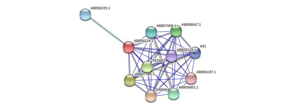 ABB56224.1 protein (Synechococcus elongatus PCC7942) - STRING interaction network