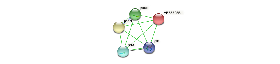 ABB56255.1 protein (Synechococcus elongatus PCC7942) - STRING interaction network