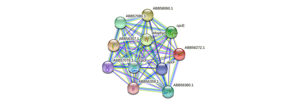 ABB56272.1 protein (Synechococcus elongatus PCC7942) - STRING interaction network