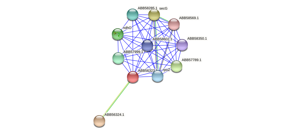 ABB56323.1 protein (Synechococcus elongatus PCC7942) - STRING interaction network
