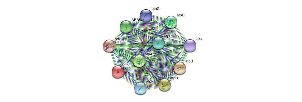 ABB56364.1 protein (Synechococcus elongatus PCC7942) - STRING interaction network