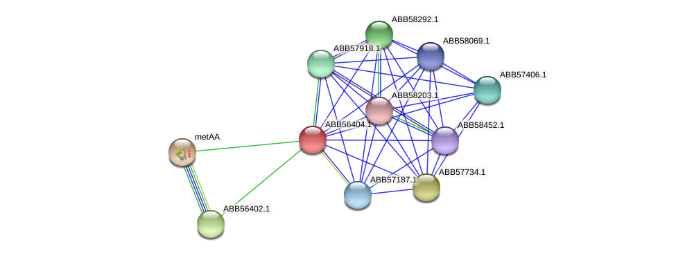 ABB56404.1 protein (Synechococcus elongatus PCC7942) - STRING interaction network