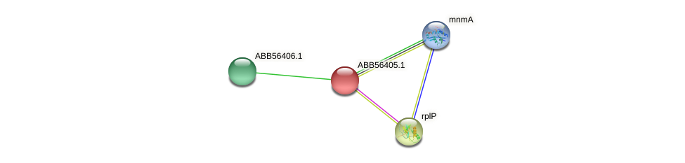 ABB56405.1 protein (Synechococcus elongatus PCC7942) - STRING interaction network