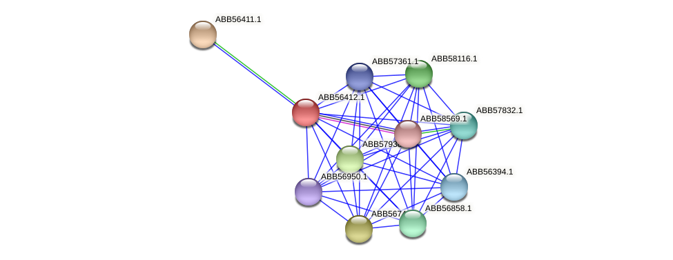 ABB56412.1 protein (Synechococcus elongatus PCC7942) - STRING interaction network