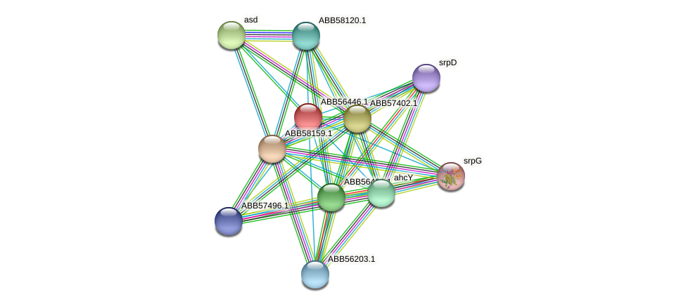 ABB56446.1 protein (Synechococcus elongatus PCC7942) - STRING interaction network