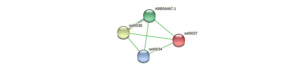 sel0037 protein (Synechococcus elongatus PCC7942) - STRING interaction network