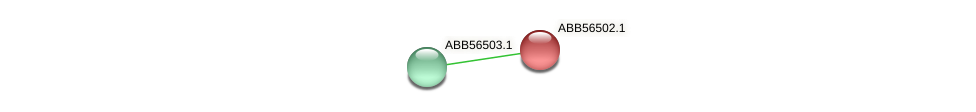 ABB56502.1 protein (Synechococcus elongatus PCC7942) - STRING interaction network