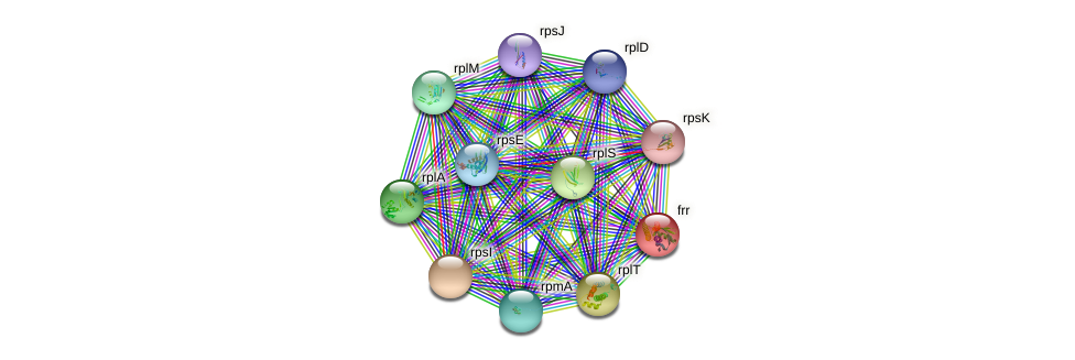 frr protein (Synechococcus elongatus PCC7942) - STRING interaction network