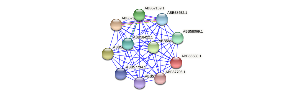 ABB56580.1 protein (Synechococcus elongatus PCC7942) - STRING interaction network