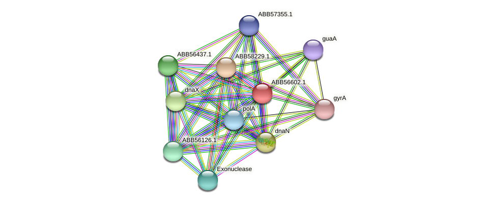 ABB56602.1 protein (Synechococcus elongatus PCC7942) - STRING interaction network