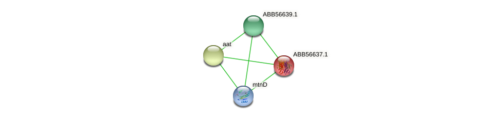 ABB56637.1 protein (Synechococcus elongatus PCC7942) - STRING interaction network
