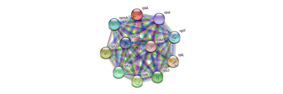 rpl1 protein (Synechococcus elongatus PCC7942) - STRING interaction network