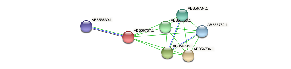 ABB56737.1 protein (Synechococcus elongatus PCC7942) - STRING interaction network