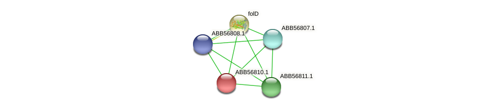 ABB56810.1 protein (Synechococcus elongatus PCC7942) - STRING interaction network