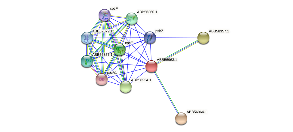 ABB56963.1 protein (Synechococcus elongatus PCC7942) - STRING interaction network