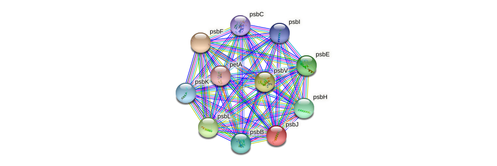 psbJ protein (Synechococcus elongatus PCC7942) - STRING interaction network