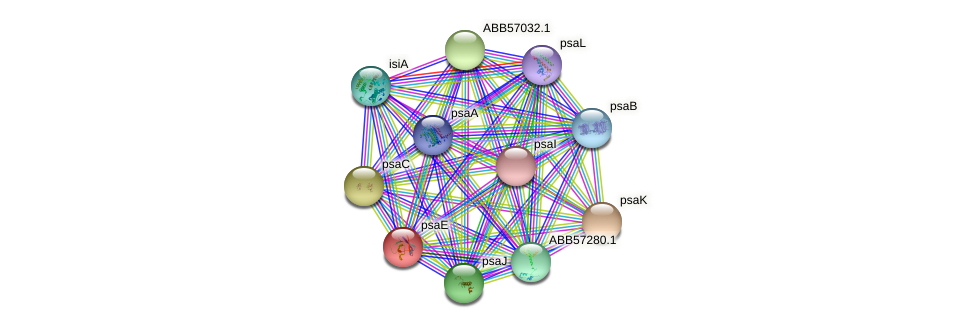 psaE protein (Synechococcus elongatus PCC7942) - STRING interaction network