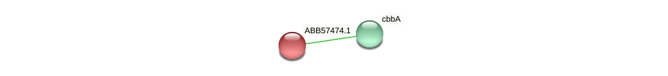 ABB57474.1 protein (Synechococcus elongatus PCC7942) - STRING interaction network