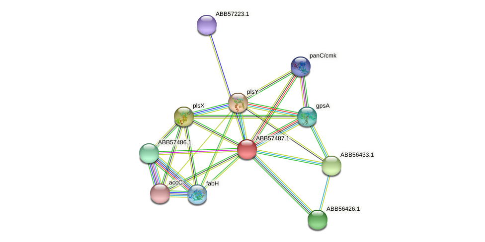 ABB57487.1 protein (Synechococcus elongatus PCC7942) - STRING interaction network