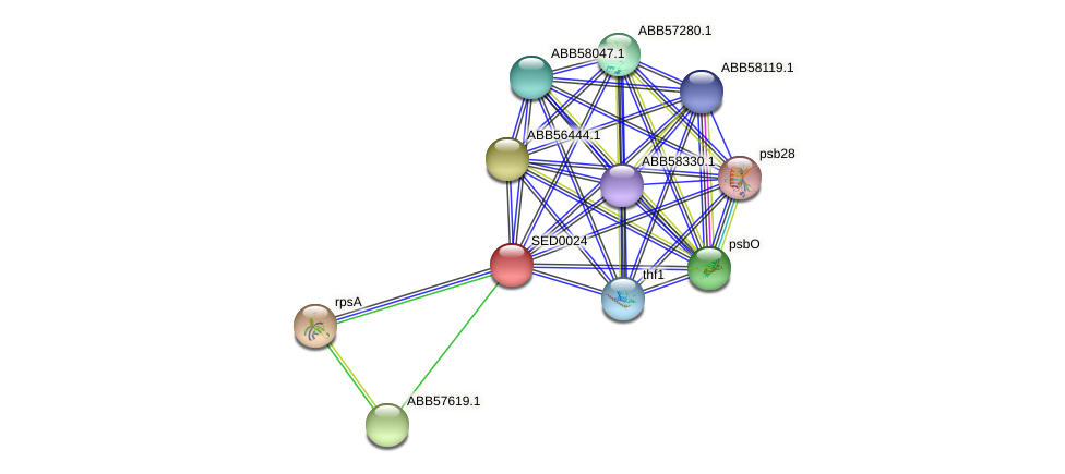 SED0024 protein (Synechococcus elongatus PCC7942) - STRING interaction network
