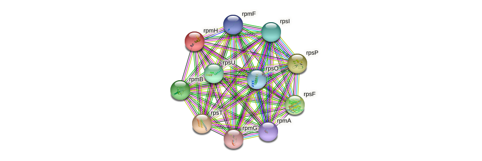 rpmH protein (Synechococcus elongatus PCC7942) - STRING interaction network
