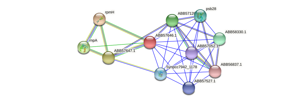 ABB57646.1 protein (Synechococcus elongatus PCC7942) - STRING interaction network