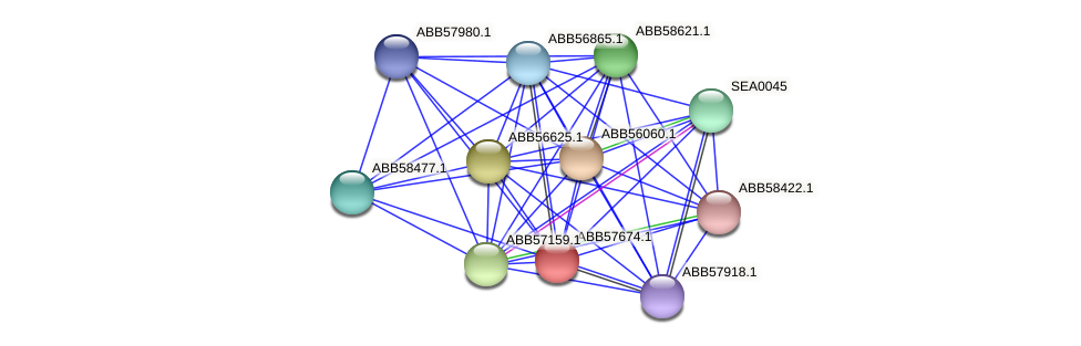 ABB57674.1 protein (Synechococcus elongatus PCC7942) - STRING interaction network