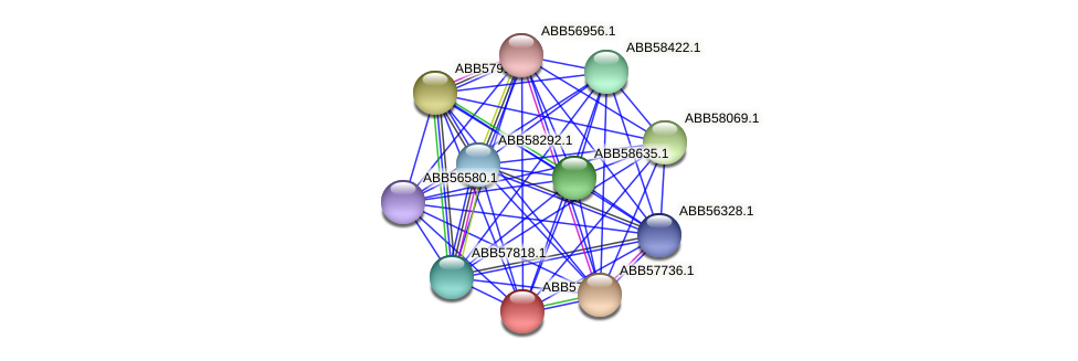 ABB57734.1 protein (Synechococcus elongatus PCC7942) - STRING interaction network