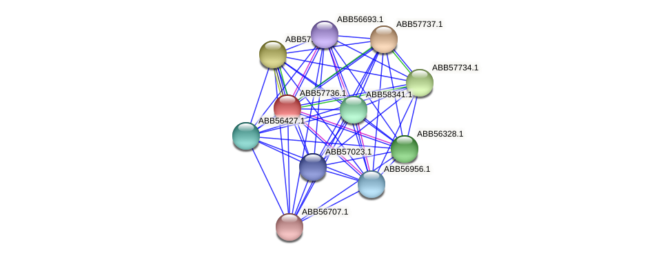 ABB57736.1 protein (Synechococcus elongatus PCC7942) - STRING interaction network