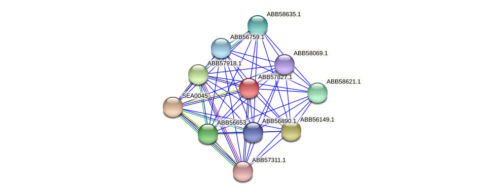 ABB57827.1 protein (Synechococcus elongatus PCC7942) - STRING interaction network