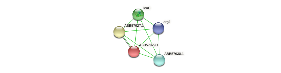 ABB57929.1 protein (Synechococcus elongatus PCC7942) - STRING interaction network
