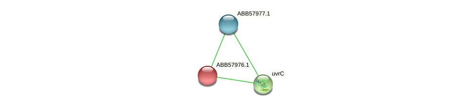 ABB57976.1 protein (Synechococcus elongatus PCC7942) - STRING interaction network