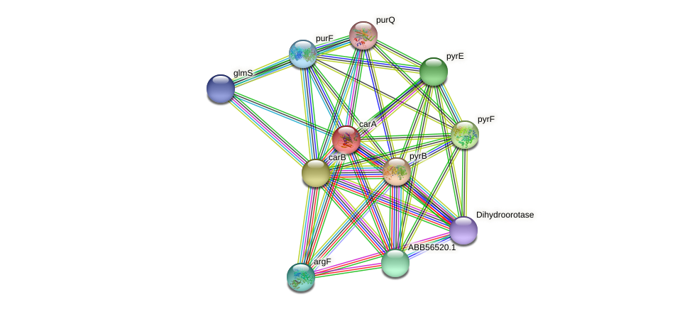carA protein (Synechococcus elongatus PCC7942) - STRING interaction network