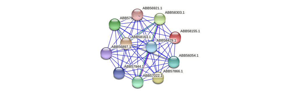 ABB58155.1 protein (Synechococcus elongatus PCC7942) - STRING interaction network